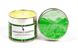 mk-alexanders-gardenia-1