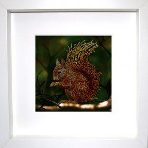 TCA-frw-Squirrel
